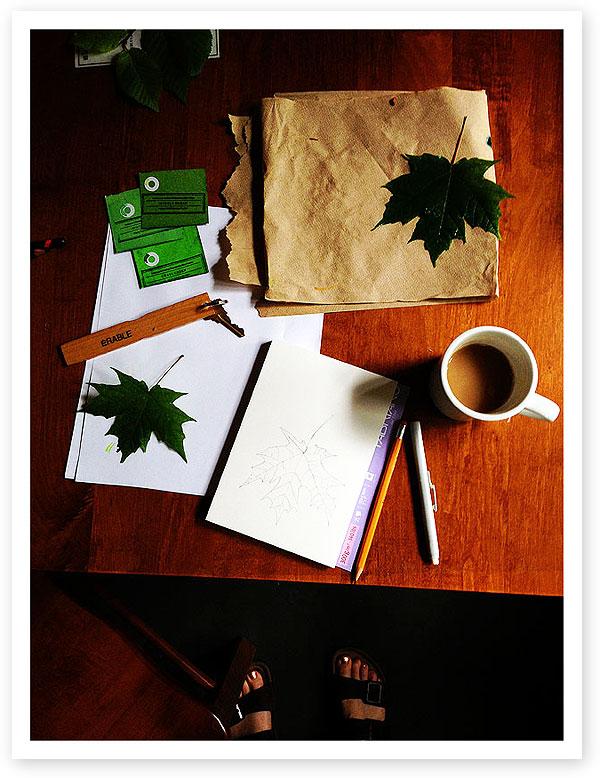 Maple leaf sketch by Lisa Spangler