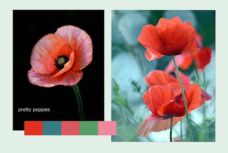 Poppy Inspiration from Pinterest